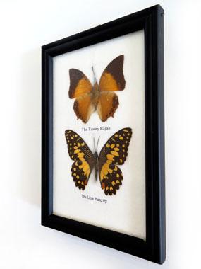 CADRE Noir à 2 Papillons