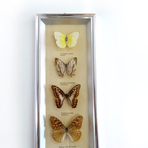 CADRE Chromé à 4 Papillons